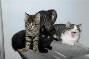 Diverse Katzenkinder_13-8-14