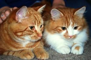 Mieze und Teddy_19-11-14