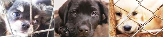 Medienmitteilung Augen auf beim Hundekauf Foto
