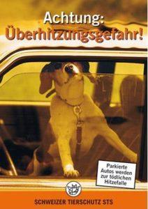 hohe phosphatwerte bei hunden